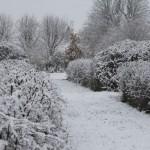 De heggentuin is in de winter een lust voor het oog.