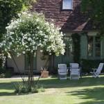 De rozenparasol bevindt zich midden op het grasveld tussen het woonhuis en het gastenhuis.