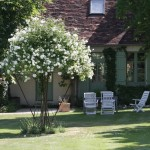 The rose parasol stands in the centre of the lawn between the main residence and guesthouse.