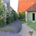 Bordure de lavande, glycine, roses et vigne vierge le long de la maison principale.