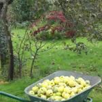 Sur le terrain se trouvent plusieurs arbres fruitiers (coings) et d`autres fruits.