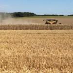 Dans cette région on cultive le blé, l`orge, le colza et les tournesols.